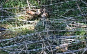 Danger to wildlife from synthetic erosion control blankets. Use biodegradable erosion control blankets to protect wildlife.