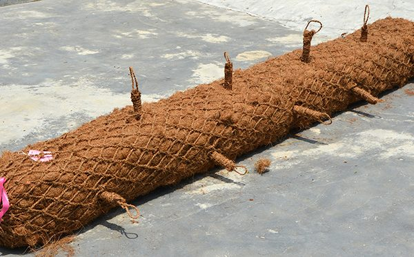 BioD-SuperLog rectangular-shaped coir log with invisible planting holes. A tool for soil bioengineering.
