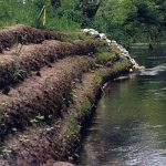 Streambank restoration with BioD-Roll coir logs.
